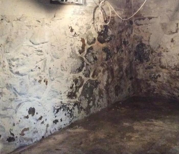 Basement Mold  After