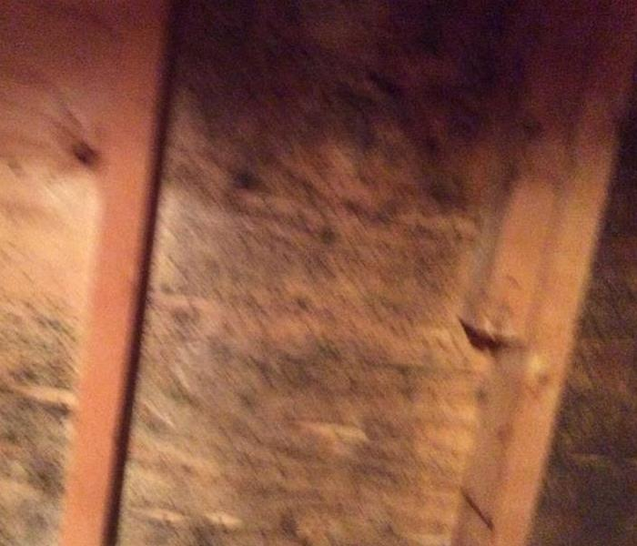 Attic Mold Before