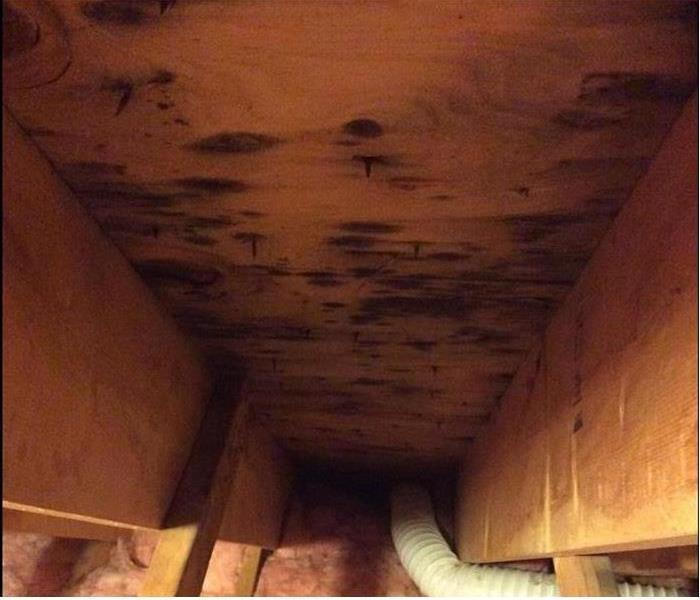 Mold Remediation When mold invades your home or business