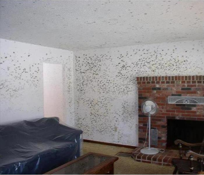 Mold Remediation When You See Mold, Call Us Today